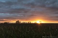 Sonnenuntergang in Gammendorf (Re Ca) Tags: fehmarn feld gammendorf ostholstein ostsee ostseeinsel schleswigholstein sunset wolken goldenestunde goldenhour sonnenuntergang