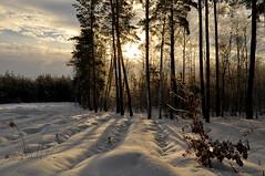 Изображения 003 (ALEKSANDR RYBAK) Tags: изображения свет солнце деревья тени день солнечный пейзаж зима мороз погода сезон природа лес снег shine sun trees shadows day solar landscape winter frost weather season nature forest snow