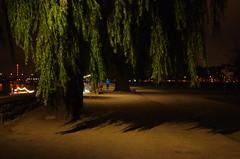 28 Dusseldorf octobre 2018 - Rheinpark Golzheim (paspog) Tags: nuit nacht night dusseldorf düsseldorf allemagne germany deutschland octobre october oktober 2018 rheinparkgolzheim parc park