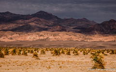 Adapting (yamanoor) Tags: landscape field hill moody sky nature photography desert desertscape california death valley national park devils cornfield mountain range arrow weed biology botany adaptation flora public lands environment ecology sand clouds canon eos 5dsr adobe lightroom