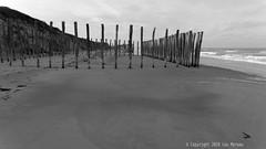 Réserve Naturelle du Platier d'Oye (Spotmatix) Tags: beach effects france hautsdefrance landscape monochrome oye places seaside
