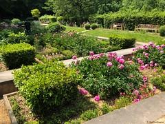 jardin© (alexandrarougeron) Tags: photo alexandra rougeron flickr fleurs nature plante végétal végétale ville beauté couleur frais