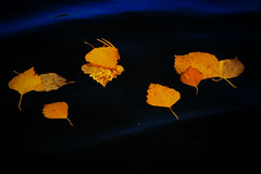 October lake (Klas-Herman Lundgren) Tags: dalarna sweden gimmen autumn höst oktober october lake sjö vatten höstlöv yellow blue sifferbo se