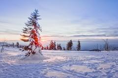 Im Abendlicht (SonjaS.) Tags: hornisgrinde schwarzwald blackfores sonnenuntergang sunst canoneos6dmarkii ef1635mmf28liiiusm blendenstern rot schnee winter snow