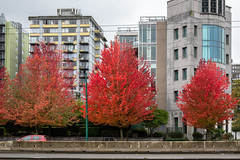 Bold (Jocey K) Tags: sonydscrx100m6 triptocanada vancouver building wet trees autumn canada city architecture clouds sky cars street buildings