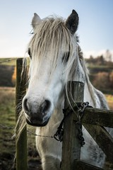 Who needs a haircut??? (apricot's) Tags: horse fringe autumn countryside animals horses littleborough nature portrait