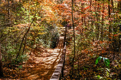 Fall on the Trail (Neal3K) Tags: georgia northgeorgia tallulahgorgestatepark