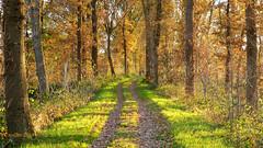 On a sunny but cold sunday in november - Slaperdijk bij Renswoude, (Cajaflez) Tags: autumn autun herfst herbst slaperdijk renswoude golden gouden path pad dijk walking wandelen trees bomen