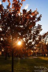 Fall-1-7 LOGO (Dave Jones Photography UK) Tags: fall autunm trees pumpkin halloween landscape sunset billinge