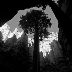 In Canyons 299 (noahbw) Tags: brycecanyon d5000 nikon utah wallstreet abstract autumn blackwhite blackandwhite bw canyon cliffs desert erosion landscape light monochrome natural noahbw rock shadow sky slotcanyon square stone tree treetrunk