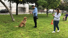 IMG_8553 (Doggy Puppins) Tags: educación canina adiestramiento canino perro dog