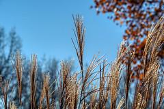 Zum Himmel empor (Friedhelm Dötsch) Tags: blümkes november gruga essen germany deutschland