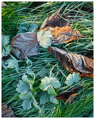 Morning frost(#2) (S.R.Murphy) Tags: october2018 nature leaves leaf grass frost morning landscape fujix100t colour stuartmurphy flickrexplore10112018