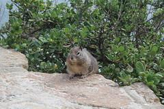 IMG_10931 (mudsharkalex) Tags: california pacificgrove pacificgroveca loverspointpark