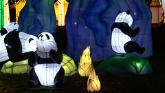 13 Paradis des Pandas (christine.petitjean) Tags: gaillac festivaldeslanternes2018 chine tang