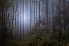 Quiet within quiet (Petr Sýkora) Tags: les mlha podzim forest nature autumn atmosphere trees morning quiet serene