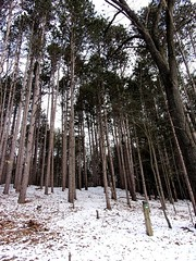Walk in the woods (PhotoJester40) Tags: outdoors outside trees forest wilderness winter amdphotographer