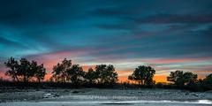 Trees (Ignacio Ferre) Tags: sunset anochecer puestadesol paisaje landscape embalsedesantillana madrid manzanareselreal españa spain naturaleza nature nikon árbol tree