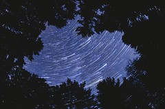 Skylight (cmarie1032) Tags: pine startrail blue nature forest eastford natchaug connecticut timelapse longexposure fisheye silhouette tree astrophotography sky night stars star