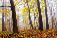 Autumn forest (Marco Allegro) Tags: italy