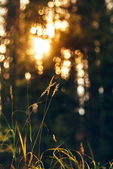 Late Hour Magic (miss.interpretations) Tags: goldenhour sunset late evening bokeh gold goldcolor mountains forest forestscene rachelbrokawphotography canon canon6dmarkii 85mm f18 lovethelight bellyshot woods georgetown campground seizethemoment serendipity colorado coloradophotographer logodesigns autumn autumn2018 familyadventures explore inspiredbynature flickr