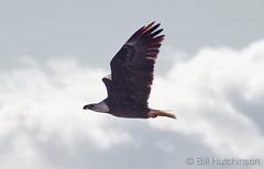 November 5, 2018 - Freedom in flight in Adams County. (Bill Hutchinson)