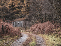 Old Barn - Loch Eck Nov 2018 (GOR44Photographic@Gmail.com) Tags: loch eck loop argyll autumn trees scotland cowal path building panasonic g9 45200mmf456 gor44