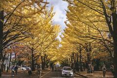 DSC_9548 (juor2) Tags: hokkaido university ginkgo autumn yellow campus nikon scene travel japan d4 reflection