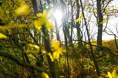 Woods light up (j.a.vink) Tags: 1855 fujifilm1855mm fujifilmxt2 woods sun autumn