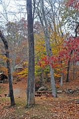 RUSTIC COLOR (KayLov) Tags: swannanoa scenery asheville grove park inn leaves foliage