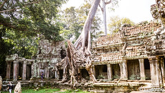 Preah Khan Temple in Siem Reap (Lцdо\/іс) Tags: preahkhan siemreap cambodge cambodia racine travel trip tree kambodscha asia asian asie asiatique treking lцdоіс visit explore temple