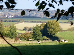 Cows of the Elham Valley (Alex-397) Tags: kent countryside scenery landscape uk england britain