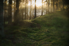 Enchanted forest (Helena Normark) Tags: forest enchantedforest dreamy heimdal trondheim sørtrøndelag norway norge sonyalpha7ii a7ii 50mm lensbaby edge50 lensbabyedge50 lensbabylove seeinanewway