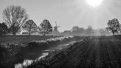 Schoondijke Sunrise (Drummerdelight) Tags: schoondijke blackwhite bw sun fields sunlight shillouettes windmill absoluteblackandwhite