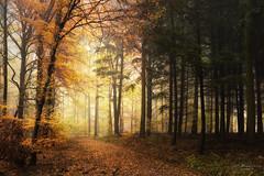 no destination (Rita Eberle-Wessner) Tags: forest wald woods waldweg forestpath foresttrail trees bäume tree baum laub leaves buche beech fichten