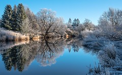 On a cold and frosty morning. (AlbOst) Tags: winterscenes frosty frost treesinwinter reflections winter winterbeauty wintermorning