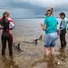 Dolphin Stranding- Tokerau Beach, Far North