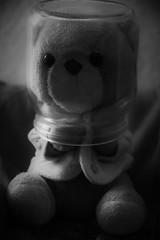 _DSC0173 (2) (willdrewitsh) Tags: william drewitsh stuffed toy plush plushie teddy bear nounours doudou peluche jouet boniface