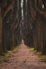 Foggy day (A_Raven_) Tags: fog trees nature italy italia toscana nebbia vaile alberi natura erba shadows ombre rami inverno winter