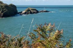 South West Coast Path - Ilfracombe to Combe Martin (Spannarama) Tags: coastpath southwestcoastpath blueskies sunshine clouds coast sea northdevon devon uk ferns rocks