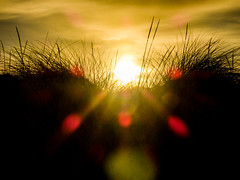 The Parting (Steve Taylor (Photography)) Tags: parting brown green red yellow newzealand nz southisland canterbury christchurch newbrighton dunes grass silhouette dawn sunrise sun sunny sunshine cloud