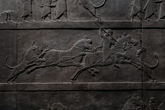 Ashurbanipal hunting lions (PChamaeleoMH) Tags: assyrian britishmuseum exhibition frieze london museum relief