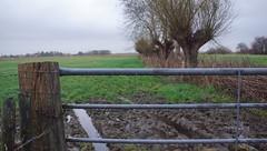 Nisse (Omroep Zeeland) Tags: grijs en regenachtig weer