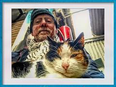 0021 (gill4kleuren - 18 ml views) Tags: pussy puss poes chat mieze katje gato gata gatto cat pet animal kitty kat pussycat poezen