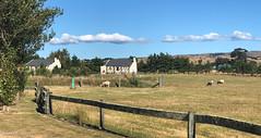 190127 173400 (Vibeke Friis) Tags: martinborough wellingtonregion newzealand nz