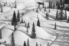 Curves of the Forest - Black and White (Bridget Calip - Alluring Images) Tags: 2019 alluringimagescolorado bridgetcalip colorado ouraycounty rockymountains sanjuancounty sanjuanmountains sanmiguelcounty thegrenadiers wilsonmesa winterwonderland allrightsreserved blueskies cold copyrighted freshsnow frozen ice
