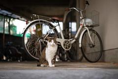 猫 (fumi*23) Tags: ilce7rm3 sony street sel55f18z sonnar a7r3 animal katze neko gato cat chat ねこ 猫 ソニー sonnartfe55mmf18za 55mm