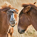 Wipe that silly grin off your face! © Laurie Ford - The absolute funniest horse expression