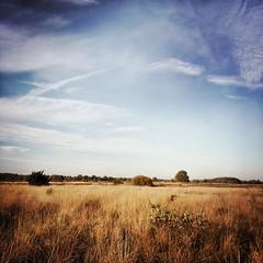 Molenveld (Jos Mecklenfeld) Tags: heide heath netherlands drenthe exloo hipstamatic landscapes nature