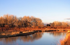 Golden Hour on the Rio Grande (Patricia Henschen) Tags: alamosacolorado sunset blanca mountain peak alamosa colorado town clouds sangredecristo mountains wetland reflection winter reflections goldenhour riogrande riogranderiver river stateavenue rural levee